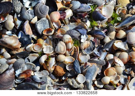 Ocean Beach Shells In Waves Summer Vacations 2