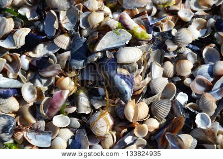 Shells Sand Beach Seacoast Summertime 4