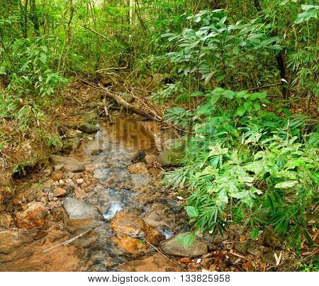 Small river flowing through rocks and a large stone in jungle of Khao Sok National Park Surat Thani Province Thailand.