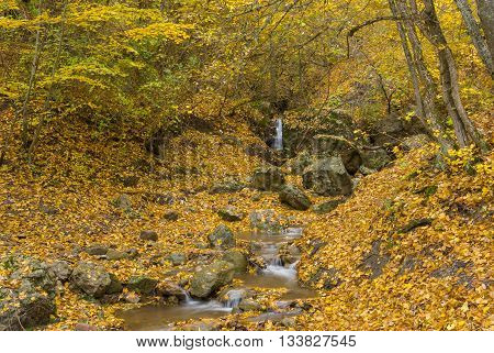 Small stream in Crimean forest at fall forest
