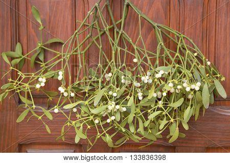 Bunch of mistletoe on the wooden door