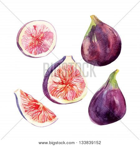 Watercolor fig fruit set isolated on white background. Watercolor common fig collection. Hand painted exotic fruit illustration