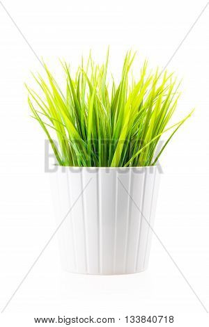 Green Artificial Lawn Grass In The White Pot Isolated