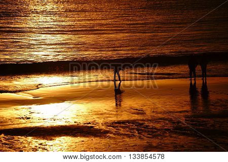 A golden sunset on the beach in Laguna Beach with the silhouette of a boy throwing stones into the water.