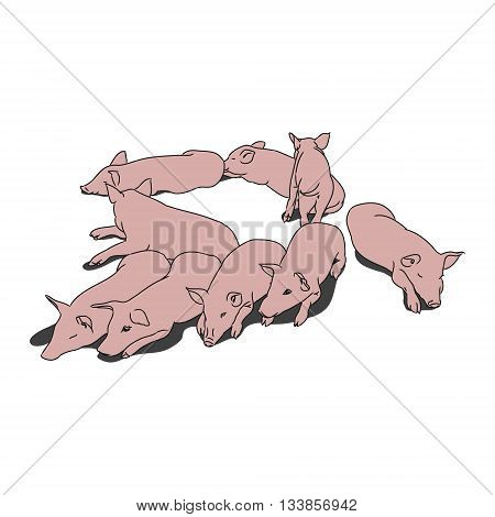 A graphic image of the piglets. Vector illustration. The pattern of small piglets