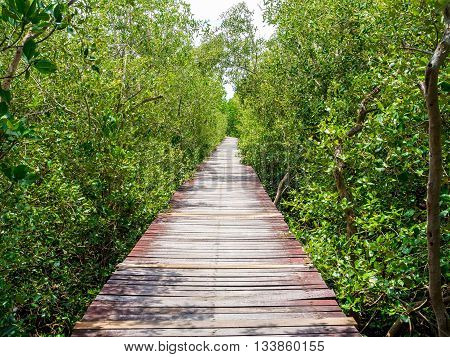 stairway leading to the tropical mangrove in the seashore, the rich of ecosystem forms on this type of swamp forest