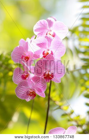 Close up shot of pink Orchid flowers