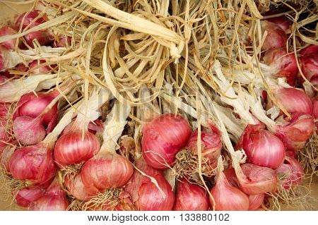 Shallot onions in a group on wood