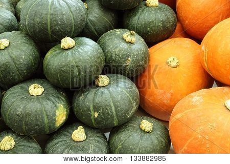 Yellow and green pumpkins piled into the background.
