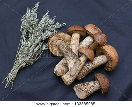 Boletus With A Bunch Of Sage