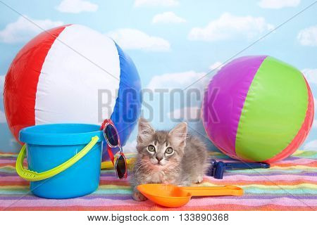 Gray long haired tabby kitten on colorful striped beach towel beach balls, bucket, shovel, sun glasses. Summer fun time.