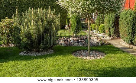 Decorative Pine In Garden