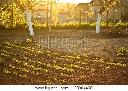 Sunlit grass - trees and grass on soft sunshine