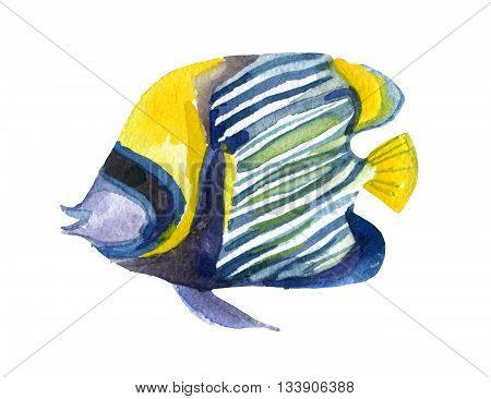 Angelfish fish isolated on white background. Watercolor hand painted illustration