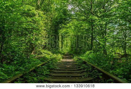 Natural tunnel formed by trees in Ukraine, tunnel of love