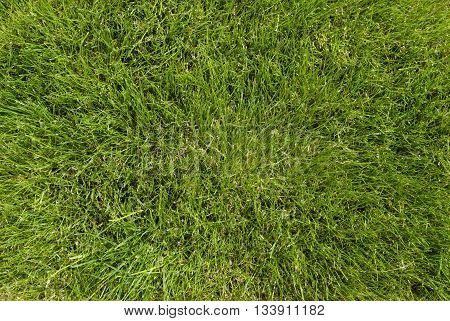 A full frame of lawn color green, full picture on green