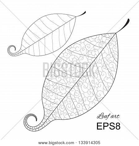 Beautiful Vector Leaf Isolated