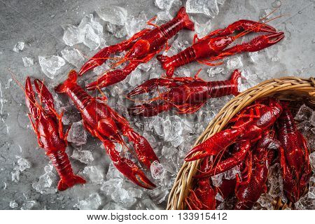 Red freshwater crayfish on a metal surface and in a basket with crushed partly melted ice. Top view.