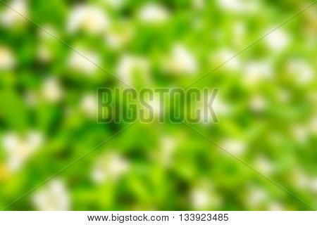 abstract green bokeh from tree, green background