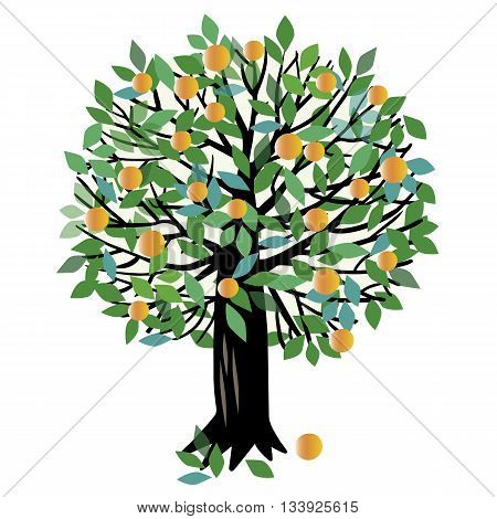 Vector illustration of a fruit tree. Peach tree or Orange tree