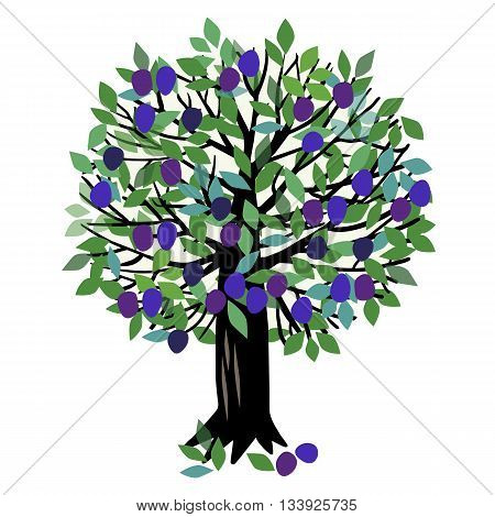 Vector illustration of a fruit tree. Plum tree