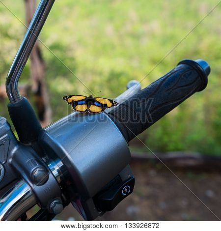 Yellow Pansy (Junonia hierta) Butterfly on motorcycle