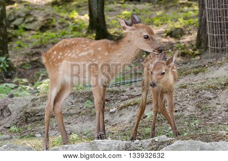 a lovely baby deer with his mother