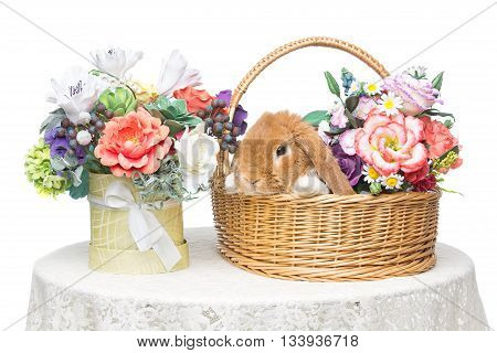 Adorable red domestic lop-eared rabbit in basket with flowers isolated over white background. Copy space.