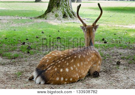 a deer resting in a quite park