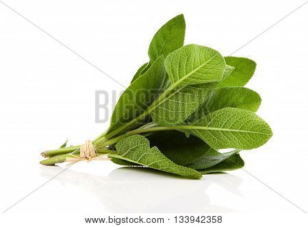 green Sage plant on a white background