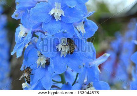 Bouquet of blue delphinium on a bed - congratulatory bouquet