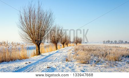 Row of pollard willow trees at the banks of a small river. The whole landscape is covered with snow and hoarfrost. It's winter.