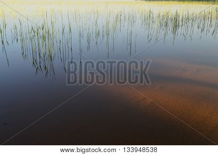 Shoreline of the lake in spring a young cane thickets