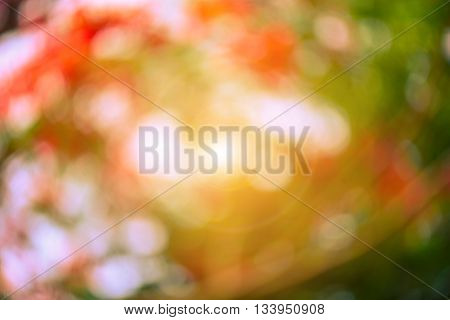 Warm yellow golden color tone blurred nature background. Abstract natural color background. Natural Bokeh