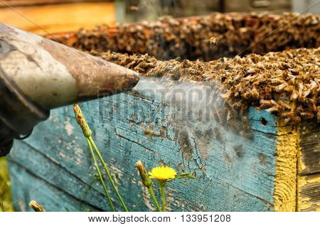 Smoker beekeepers tool to keep bees away from hive Apiculture