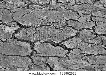 cracked earth from grobal warming in black and white