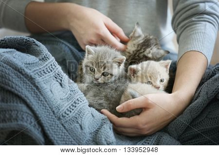 Woman holding small cute kittens