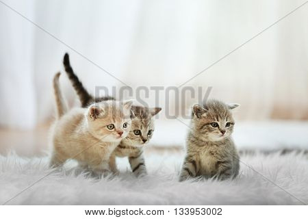 Small cute kittens on carpet