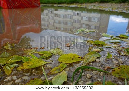 the leaves of the tree in the puddle of water and reflection