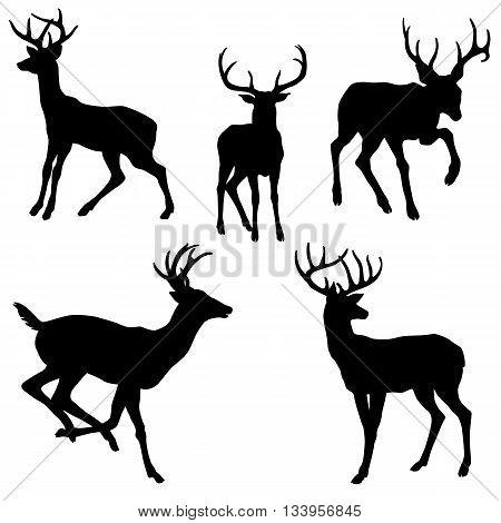 adult male deer silhouette black vector illustration set
