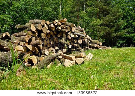 sawn firewood for the winter poised on green grass