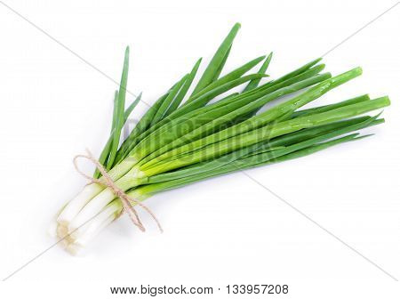Fresh washed spring onion isolated close up