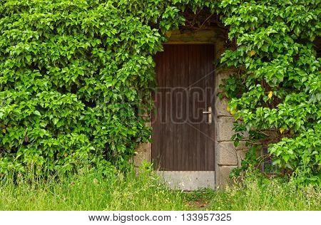 wooden basement door overgrown green leaves and grass