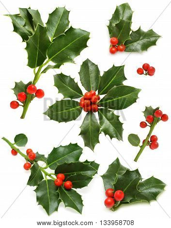 Christmas holly set - green leaf red berry and twig