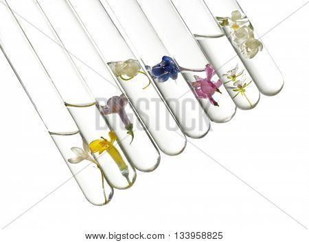 Flowers in test tubes on light background