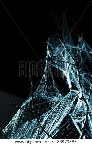 Abstract Spiderweb on branch on black background