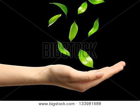 Green leaves falling into woman hands, isolated on black