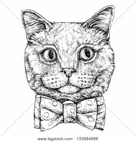 Hand drawn portrait of Cat with bow tie. Vector illustration isolated on white