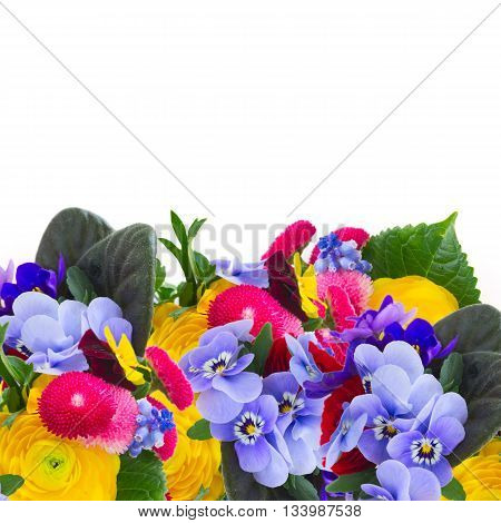 Posy of violets, pansies, daisies and ranunculus border isolated on white background