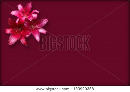 Three isolated red lilies on the claret background with thin dark border